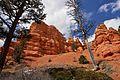 Dixie National Forrest, Utah (3447037616).jpg