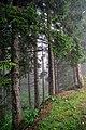 Doğayı,doğal yaşamak gerek.. - panoramio.jpg