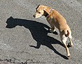 Dog & shadow (1297520038).jpg