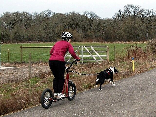 Top Dog Training West Drayton