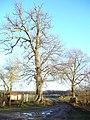Dolydd Hafren Nature Reserve - geograph.org.uk - 632415.jpg