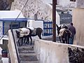 Donkeys Carrying Bags of Cement.jpg