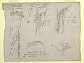 Drawing, Botanical Studies made from the Rio Magdalena, Colombia- Parasite, Dead Tree, 1853 (CH 18203525).jpg