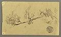 Drawing, Tree, 1877 (CH 18192129).jpg