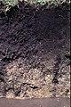 Drummer Soil Series - From USDA NRCS.jpg