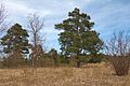 Duben vysenske kopce 35.jpg