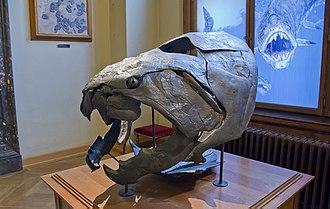 Dunkleosteus - Reconstructed skull, Vienna Natural History Museum