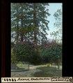 ETH-BIB-Ascona, Rhododendron-Dia 247-12422.tif