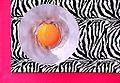 Egg Yolk On Pink and Zebra (3922804339).jpg