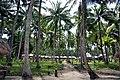 El Dorado beach resort,Havlock island Andaman - panoramio.jpg