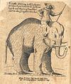 Elefant 1629.jpg