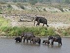 Elephant group in Corbett TR, June 2017, AJT Johnsingh. P1120887.JPG