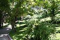 Entrada Rosaleda Parte TRasera (11983467924).jpg