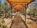 Entrance pathway to the Baptism site at Bethany.jpg