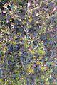 Euphorbia dulcis 'Chameleon' kz1.jpg