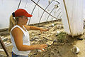 FEMA - 590 - Photograph by FEMA News Photo taken on 06-05-2000 in Missouri.jpg