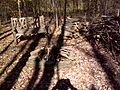 FLT M19 Spanish Loop Trail 0.3 mi - Irvin Memorial Bivouac Area with rock fire ring and bench - panoramio.jpg