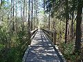 FL Blackwater River SP bdwlk01.jpg
