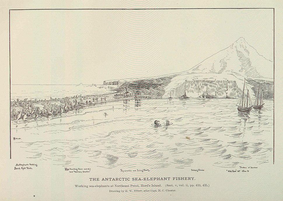 FMIB 46007 Antarctic Sea-Elephant Fishery.jpeg
