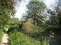 Fallen Tree - Basingstoke Canal - geograph.org.uk - 1014444.jpg