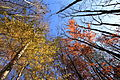 Falling Colors of Autumn (4108906100).jpg