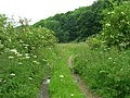 Farm Track off the B1251 - geograph.org.uk - 1374965.jpg