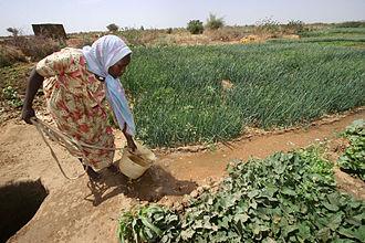 North Darfur - Farmer irrigating crops in North Darfur