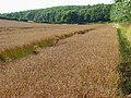 Farmland, Boxford - geograph.org.uk - 925072.jpg
