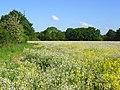 Farmland, Hurst - geograph.org.uk - 814261.jpg