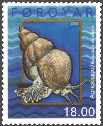 Buccinidae - Buccinum undatum on a stamp from the Faroe Islands