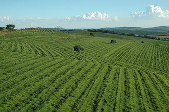 Coffee production in Brazil - A coffee plantation in Minas Gerais