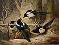 Ferdinand von Wright - Magpies round a Dead Woodgrouse - A I 62 - Finnish National Gallery.jpg