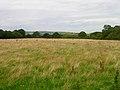 Field near Ninham Farm - geograph.org.uk - 509310.jpg