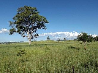 Cryna, Queensland - Fields, Markwell Creek Road, 2016