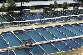 Timeline of food - Modern aquaculture