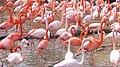 Flamingo02 960.jpg