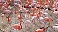 Flamingo04 960.jpg