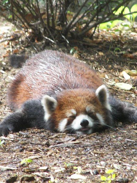 File:Flat panda.jpg