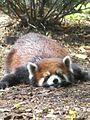 Flat panda.jpg