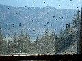 Fliegenfenster - panoramio.jpg