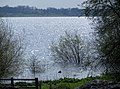 Flooded bushes - a very full Rutland Water - April 2014 - panoramio.jpg