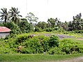 Flora at Port Blair - panoramio.jpg