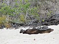 Floreana - Cormorant Point - Galapagos Islands - Ecuador (4870747319).jpg