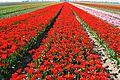 Floriculture centre, Lisse.jpg