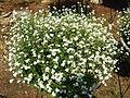 Flower-center133817.jpg