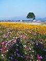 Flower-sea in Sinshe.JPG