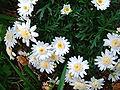 Flower 144607.jpg