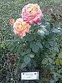 Flowers - Fiori (17338004089).jpg