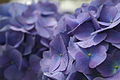 Flowers 2 - West Virginia - ForestWander.jpg