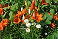 Flowers Lilies Liljat 06.jpg